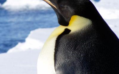 Linux / Apache2 / MySQL / MSMTP / PHP Web, or App Server Setup