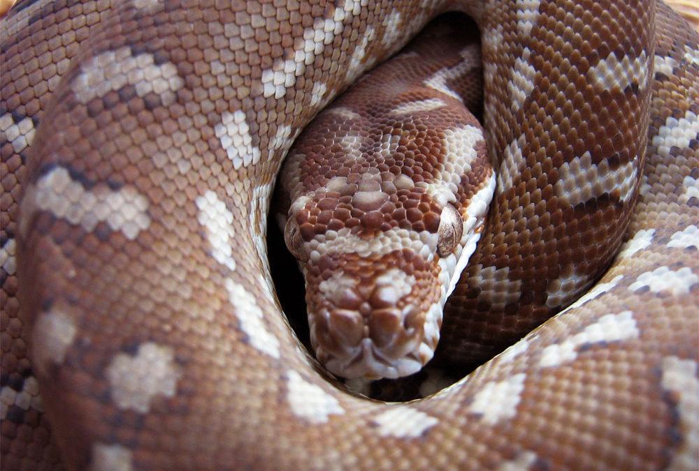 Nginx, Python, Flask-SocketIO and REST API's over WebSockets